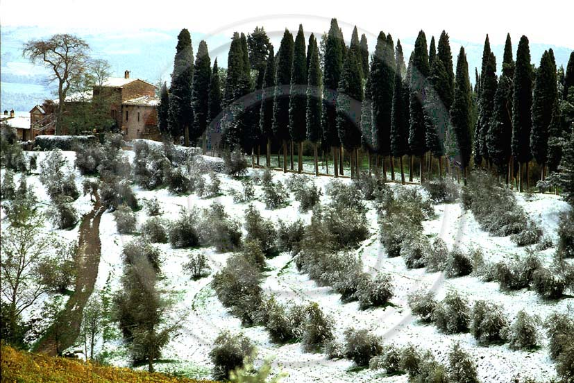 1997 - Landscapes of cipress ad farm with snow in winter, Biondi Santi wine house, Montalcino village, Arbia valley, 20 miles south the province of Siena.
