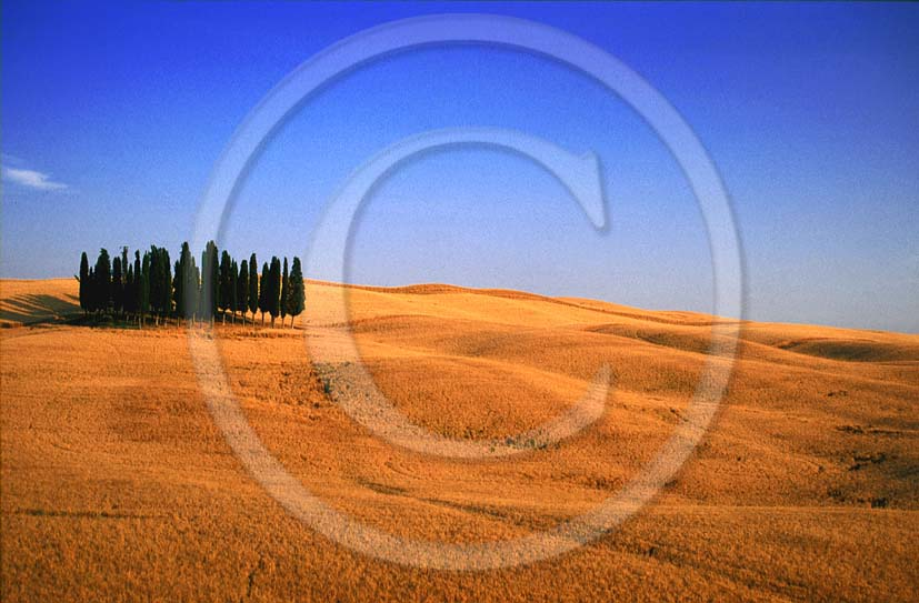 2000 - Landscapes of cipress and field of bead in summer, near S. Quirico village, Orcia valley, 15 miles south the province of Siena.