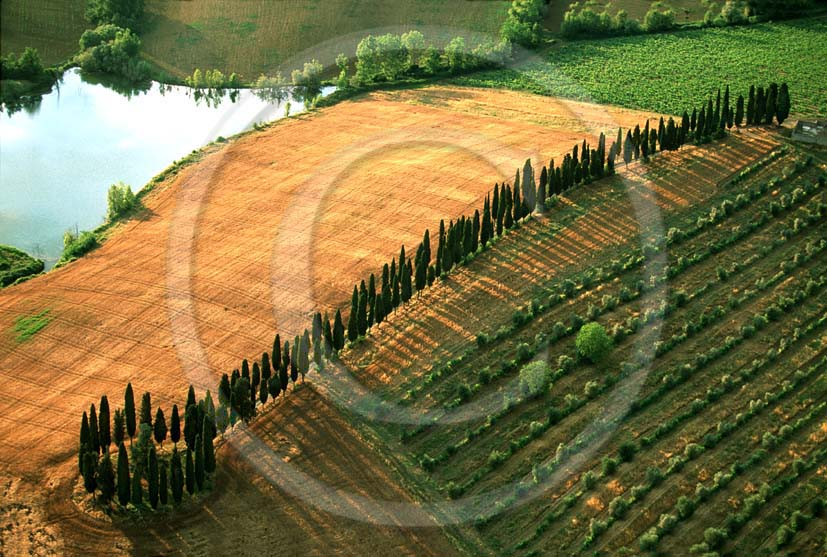 1999 - Aerial view of cipress line in summer, near Lilliano place, Chianti land, 7 miles north the province of Siena.