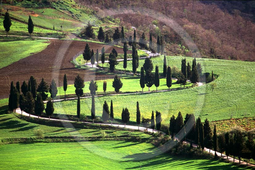 1995 - Landscapes of cipress line in spring, near Pienza village, Orcia valley, 24 miles south province of Siena.