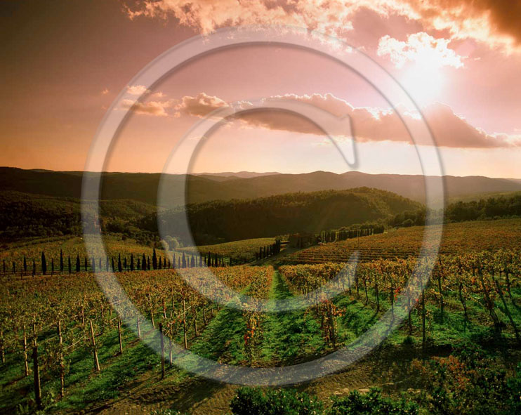 1999 - Landscapes of vineyards on sunset in autumn, near Radda village, Chianti land, 30 miles south the province of Florence.