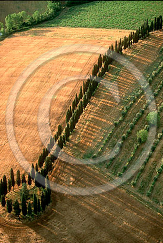 2000 - Aerial view of cipress linein field of bead and vineyards, near Lilliano wine farm, Chianti land, 14 miles north province of Siena.