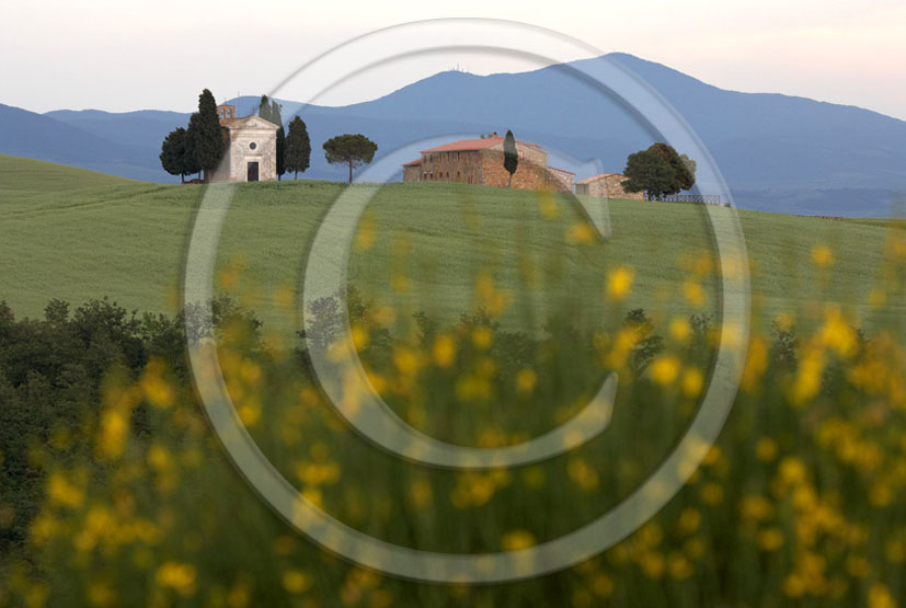 2005 - Landscapes of farm and church in field of bead with yellow Ginestra flower in spring, near Pienza village, 24 miles south province of Siena.