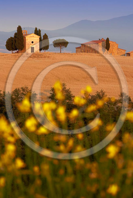 2005 - Landscapes of farm and church in field of bead with yellow Ginestra flower in summer, near Pienza village, 24 miles south province of Siena.