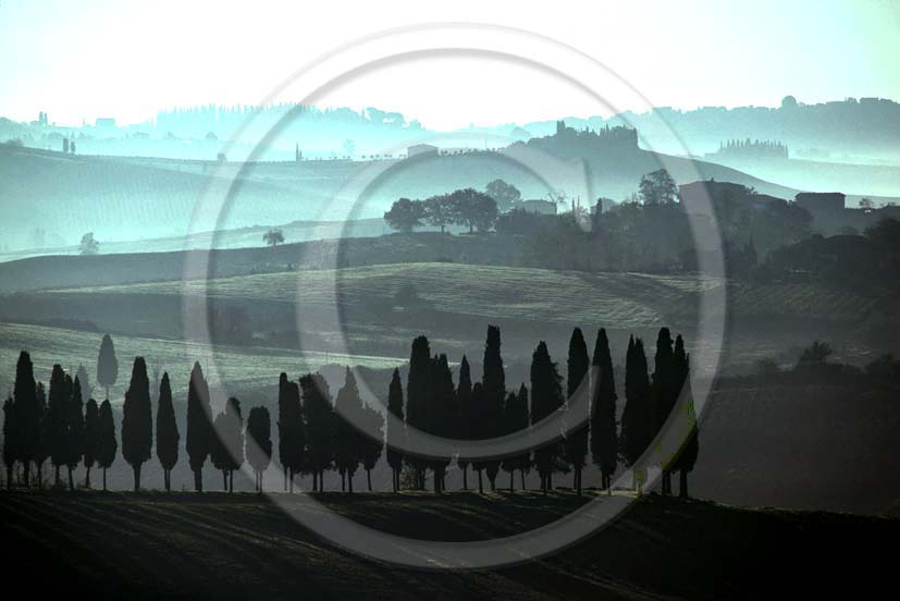 1985 - Landscapes of cipress with fog in early morning, near Lilliano place, Chianti land, 12 miles north the province of Siena.