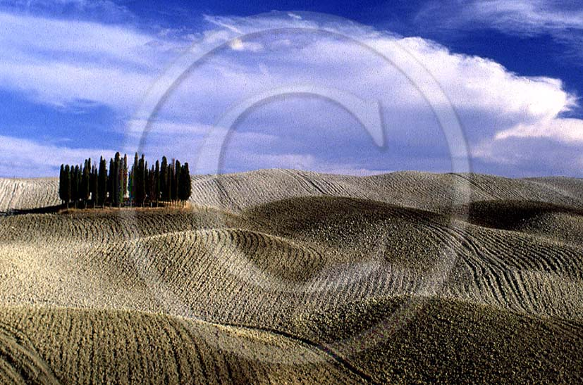 1987 - Landscapes of cipress in autumn, near S.Quirico village, Orcia valley, 15 miles south the province of Siena.