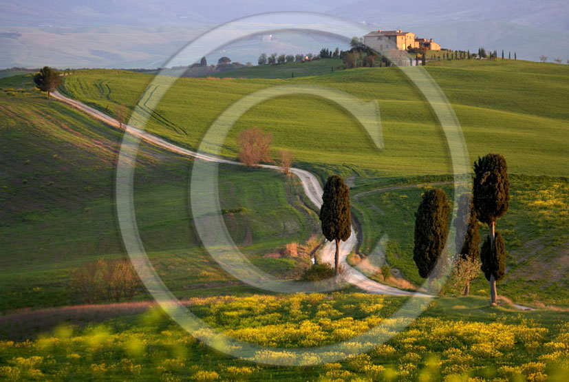 2006 - Landscapes of farm and cipress with yellow Colsa flower on early morning in spring, near Pienza village, 22 miles south province of Siena.