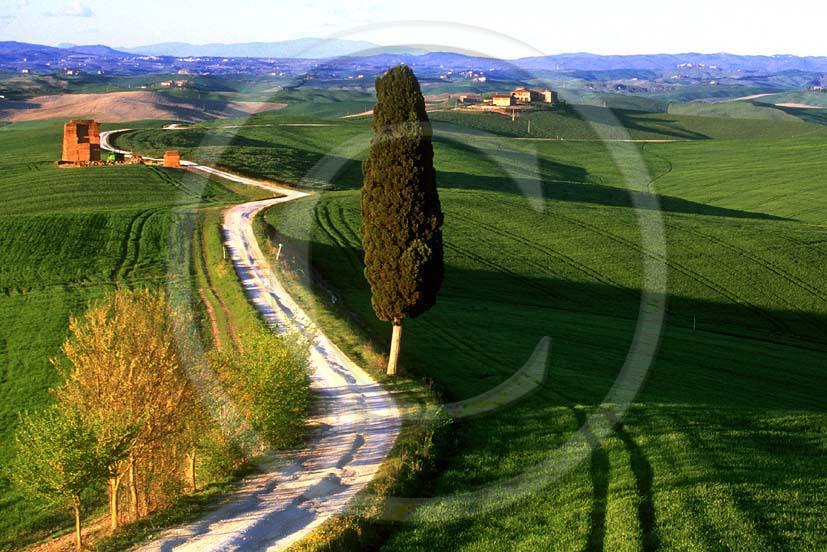 2000 - Landscapes of cipress and field of bead in spring, near Ville di Corsano village, Arbia valley, 4 miles east the province of Siena.