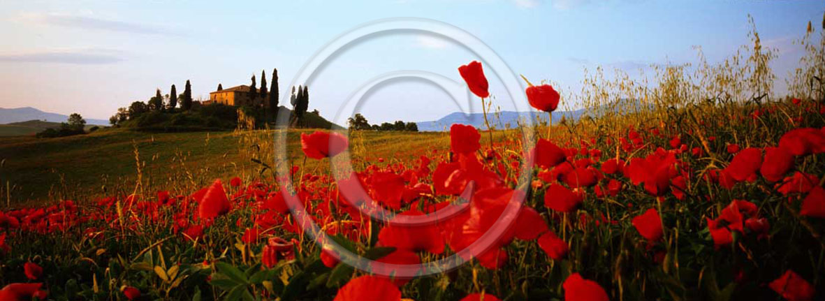 2001 - Panoramic view of farm, cipress and red poppies in spring, near S.Quirico village, Orcia valley, 21 miles south the province of Siena.