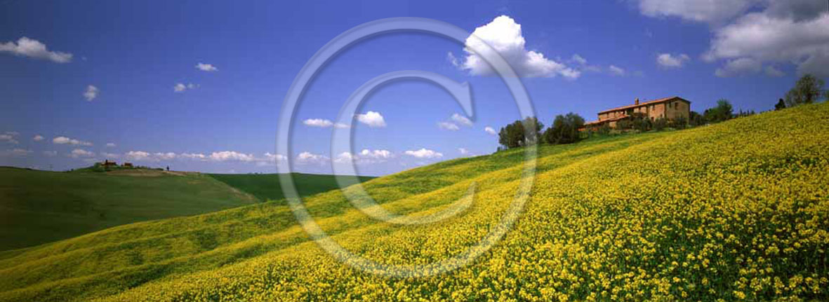 2001 - Panoramic view of farm and yellow colsa flower in spring, near Montisi village, Crete Senesi land, 23 miles south the province of Siena.
