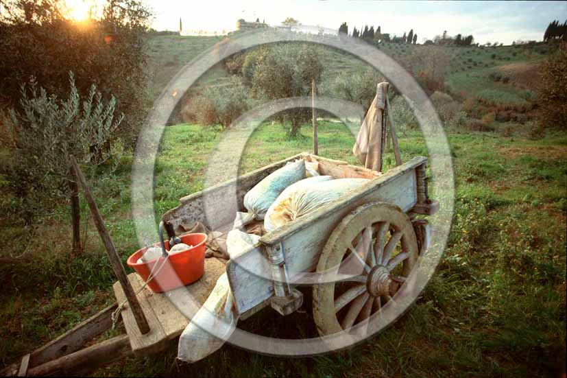 1998 - Old carriage for oil harvest in Chianti land.