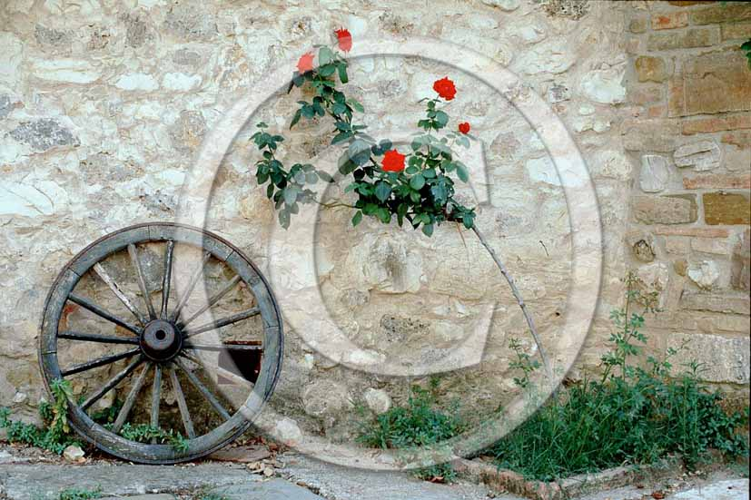 1985 - Old wheel of tuscany carriage.