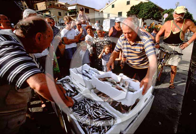 2004 - Fishers collect the fishes from the boats at the end of the daily work in Tirreno sea, Catiglione della Pescaia village, Maremma land, 20 miles north the province of Grosseto.