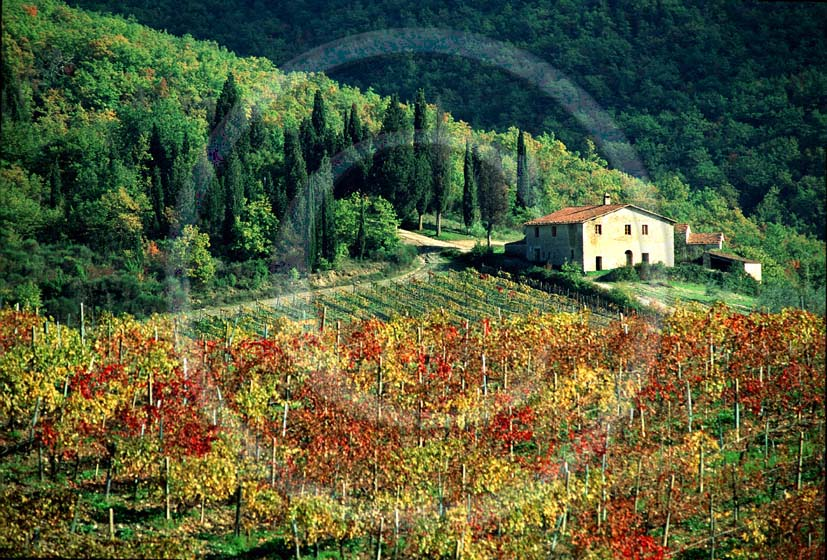 1993 - Landscapes of farm and vineyards on autumn, near Rocca delle Macie place, Chianti land, 13 miles north the province of Siena.