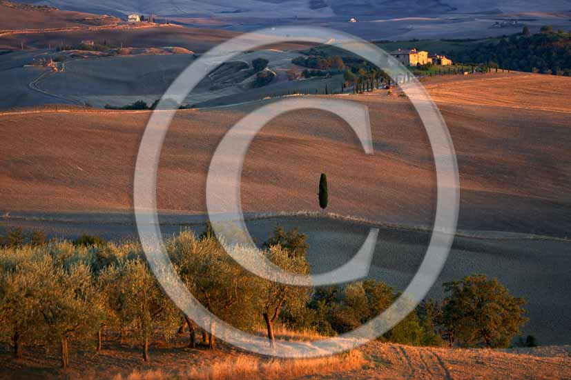 2006 - Landscapes with cipres, olives-trees and farm in autumn on sunset, Terrapile place, Orcia Valley, near Pienza village, 26 miles south the province of Siena.