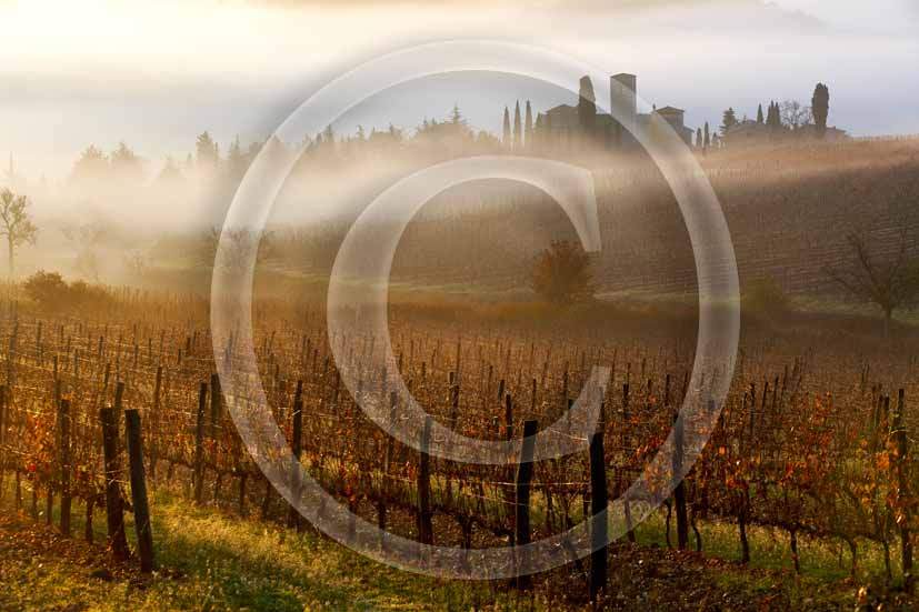 2006 - Landscapes with fog in early morning on autumn, Castle of Spaltenna in background, Chianti land, near Gaiole in Chianti village, 12 miles est the province of Siena.