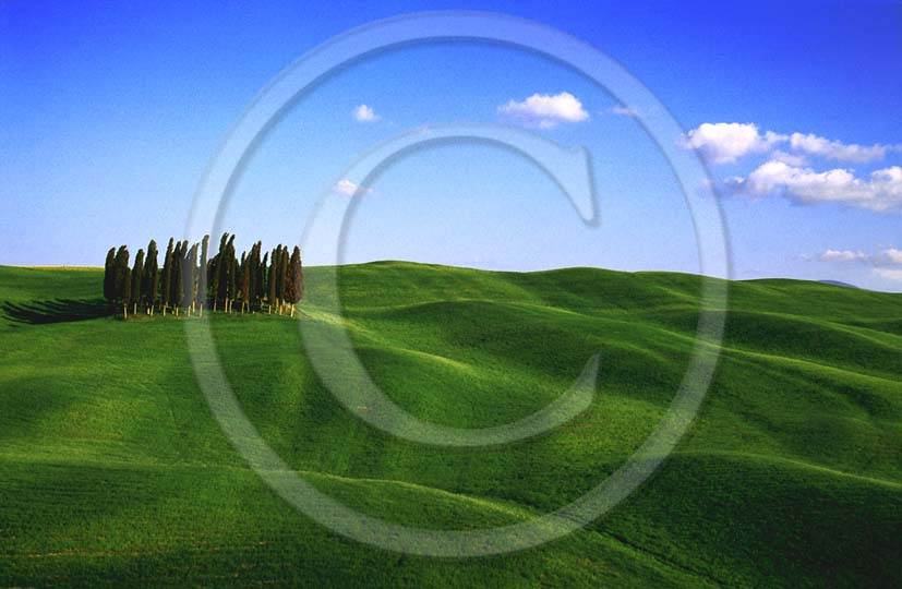 2000 - Landscapes of cipress and field of bead in spring, near S. Quirico village, Orcia valley, 15 miles south the province of Siena.