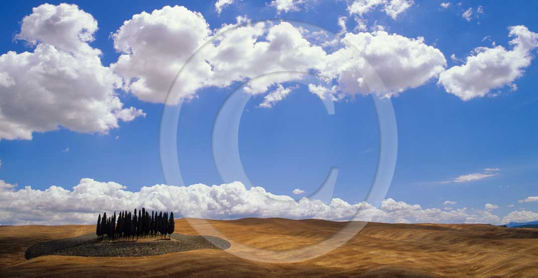 2001 - Panoramic view of field of bead with cipress and white clouds in summer, near S.Quirico village, Orcia valley, 14 miles south the province of Siena.