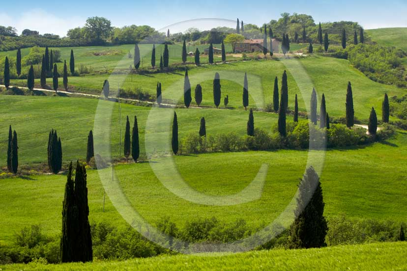 <DIV>2007 - Landscapes&nbsp;with farm&nbsp;and cipress line in green in spring, near La Foce place, Orcia valley,&nbsp;35 miles south province of Siena.</DIV>