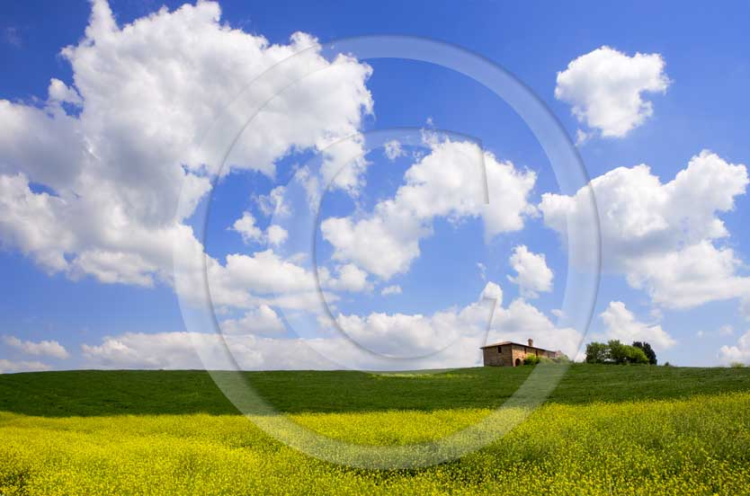 2007 - Landscapes of field of bead with farm in yellow colsa flower and white clouds in blue sky on spring, Orcia Valley, near Pienza village, 26 miles south the province.