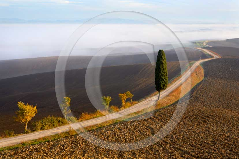 2007 - Landscapes of cipress with fog on sunrise in autumn, near Ville di Corsano place, 14 miles east province of Siena.