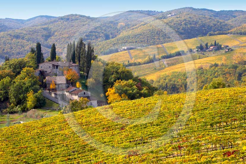 2007 - Landscapes of yellow and red vineyards with farm in autumn on early morning, near Panzano, Chianti valley, 23 miles south the province of Florence.