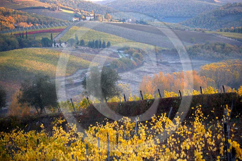 2007 - Landscapes of yellow and red vineyards with fog on early morning in autumn, near Radda in Chnati, Chianti land, 18 miles north est the province of Siena.