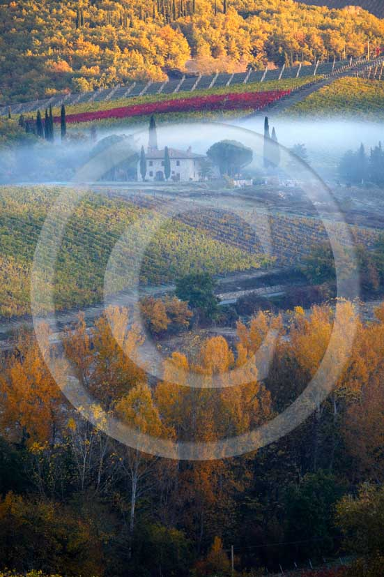 2007 - Landscapes of yellow and red vineyards and farm with fog on early morning in autumn, near Radda in Chianti, Chianti land, 18 miles north est the province of Siena.