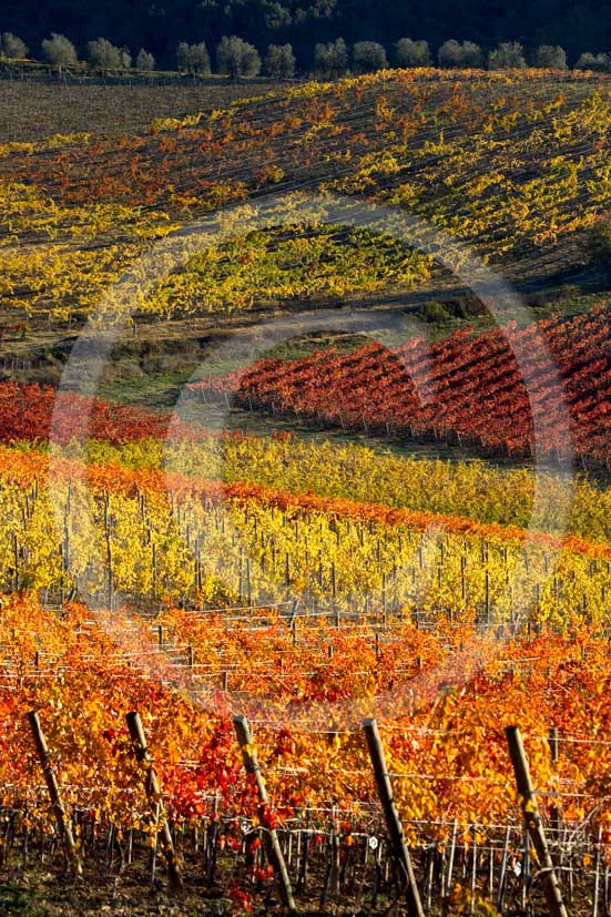 2007  - Landscapes of yellow and red vineyards and farm on early morning in autumn, La Strolla place, near Poggibonsi village, Chianti land, 25 miles south the province of Florence.