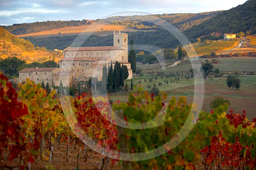 2007  - View of S.Antimo abbay with red and yellow vineyards on sunrise in autumn, Arbia valley, near Montalcino village, 20 milse south the province of Siena.