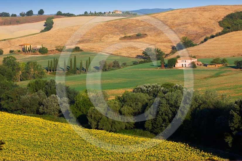 2008 - Landscapes with farm in summer, with brown field of bead and yellow sunflower, near Buonconvento village, Crete senesi land, 14 miles south the province of Siena.