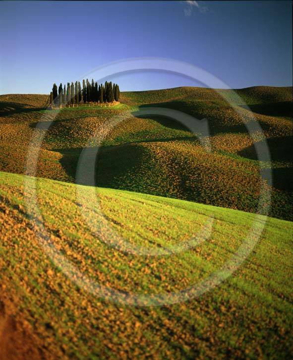 2003 - Landscapes of cipress and field of bead in autumn, near S.Quirico village, Orcia valley, 18 miles south province of Siena.