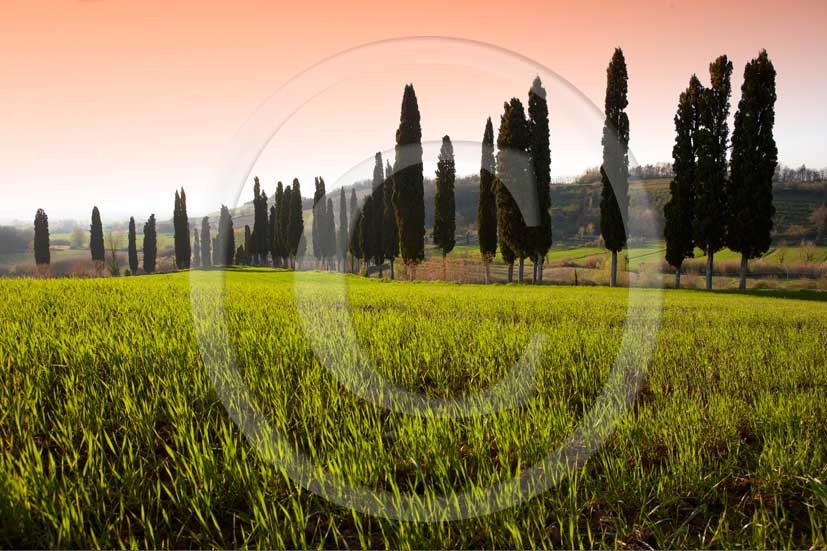 2008 - Landscapes with cipress line on green field of bead on sunrise in winter, near Peccioli village, Era Valley, 21 miles south east the province of Pisa.