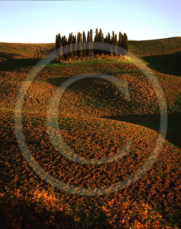 2002 - Landscapes of cipress and field of bead in autumn, near S.Quirico village, Orcia valley, 18 miles south province of Siena.