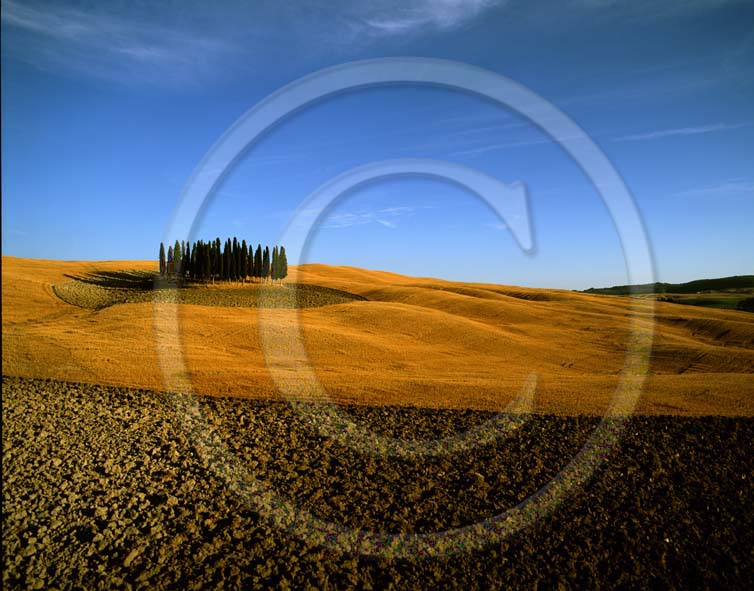 2003 - Landscapes of cipress and field of bead in summer, near S.Quirico village, Orcia valley, 18 miles south province of Siena.