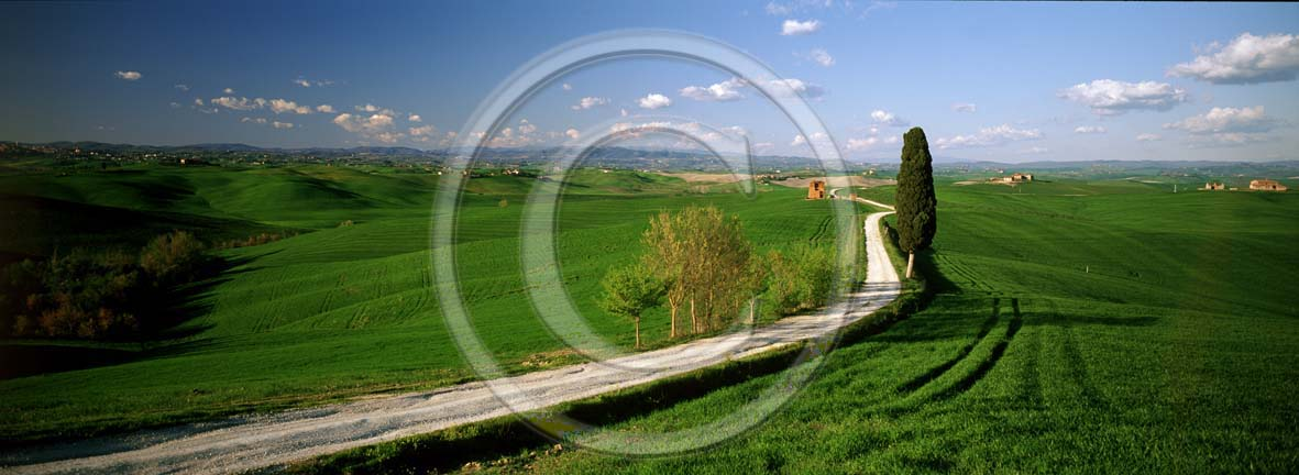 2002 - Panoramic view of cipress and field of bead in spring, near Ville di Corsano place, Crete Senesi land, 17 miles east province of Siena.