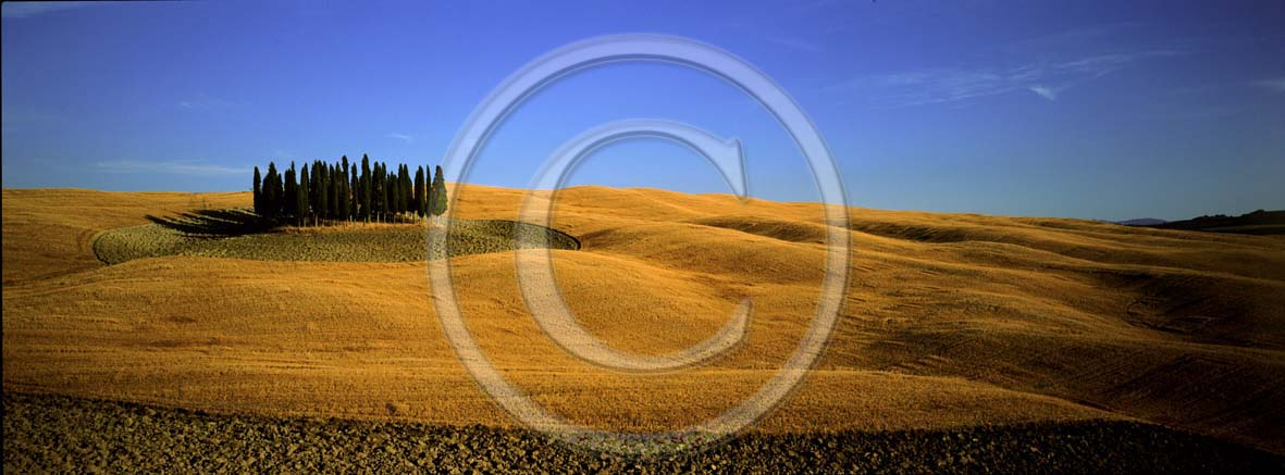 2003 - Panoramic view of cipress and field of bead in summer, near S.Quirico village, Orcia valley, 18 miles south province of Siena.