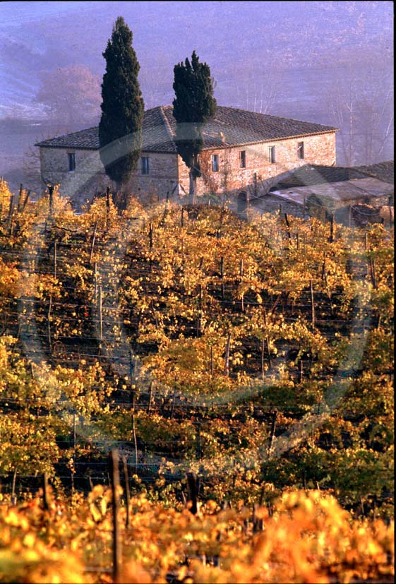 1987 - Landscapes of farm and vineyards in autumn near Quercegrossa village, Chianti land, 8 miles north province of Siena.