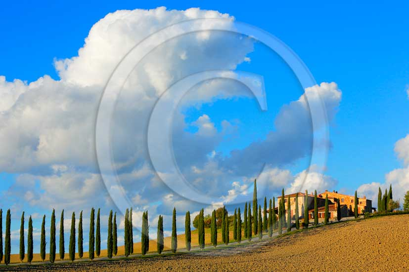 2013 - View on late afternoon in autumn of farm and cypress in Orcia valley.