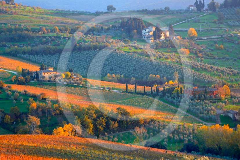 2013 - View of red, green vineyards near Panzano village in Chianti Classico land.