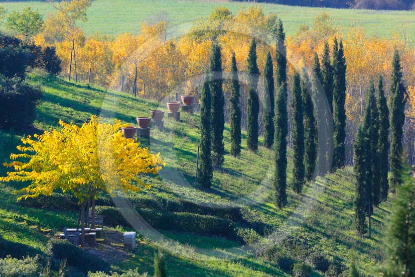 2013 - View of cypress in autumn inside La Ragnaia Wood in Orcia valley in spring.