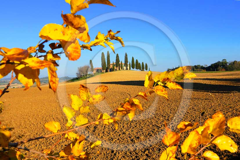 2013 - View of farm and cypress with in Orcia valley in autumn