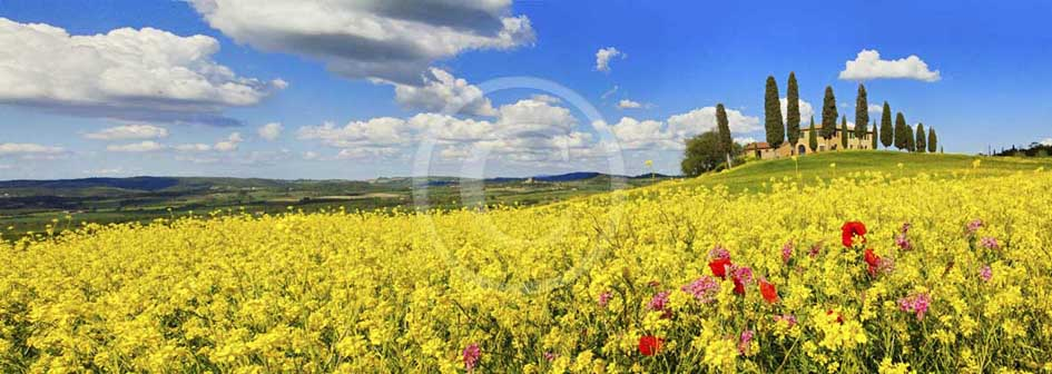 2013 - Panoramic wiew of farm and cypress with and yellow Colsa flowers in Orcia valley in spring.