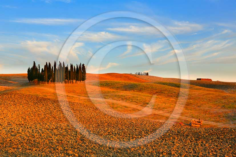 2013 - View on sunset of cypress in Orcia valley.