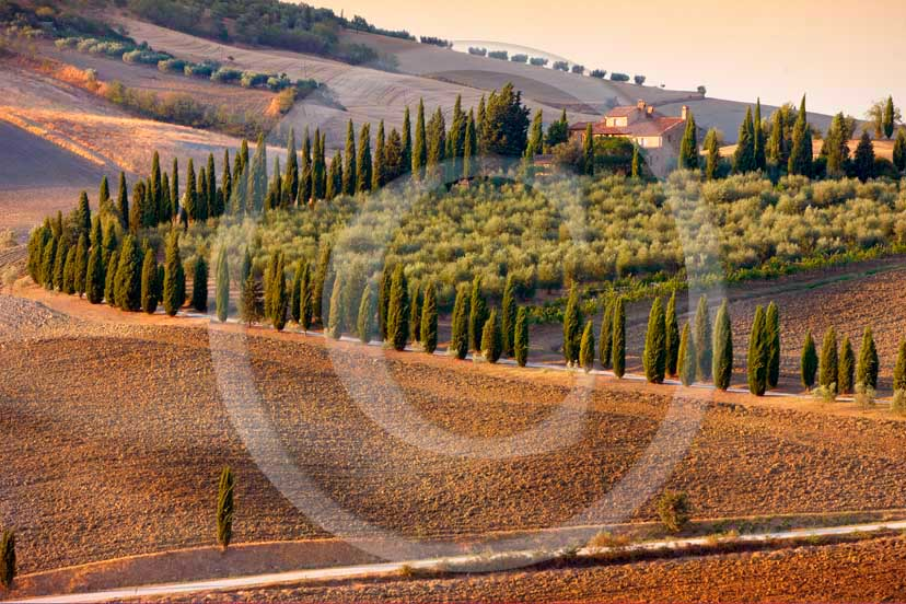 2008 - Landscapes with cypress line and farm on