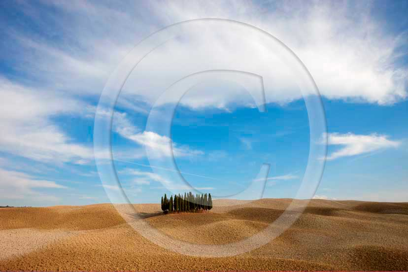 2008 - Landscapes of cipress and field with white clouds and blue sky in autumn, near