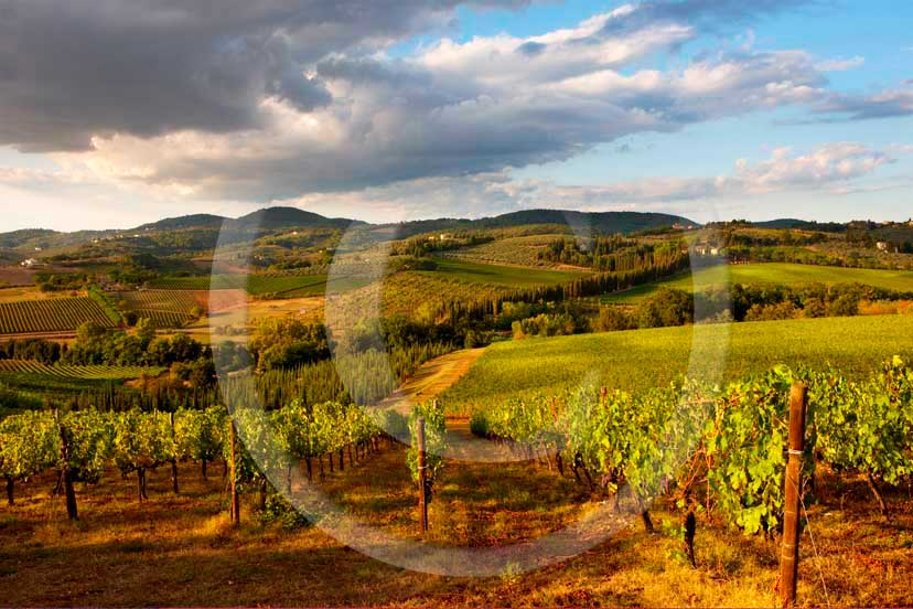 2008 - Landscapes of vineyards on late afternoon in autumn, near Cerbaia village, Chianti land, 20 miles east the province of Florence.