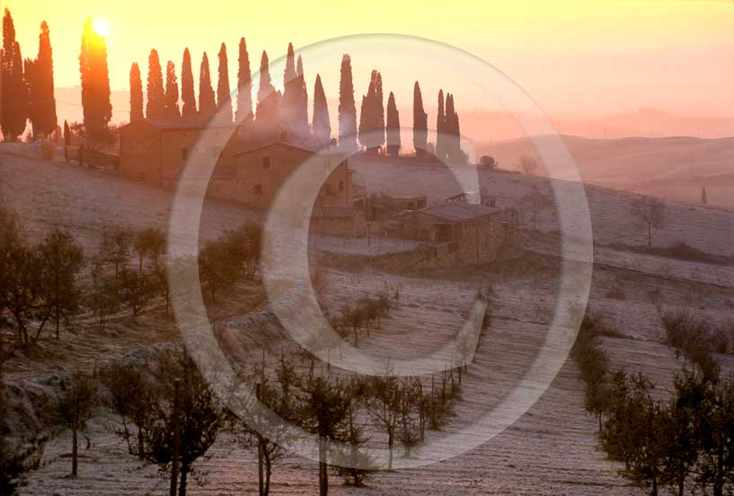 2008 - Landscapes of farm, cypress and frost on sunrise in winter,