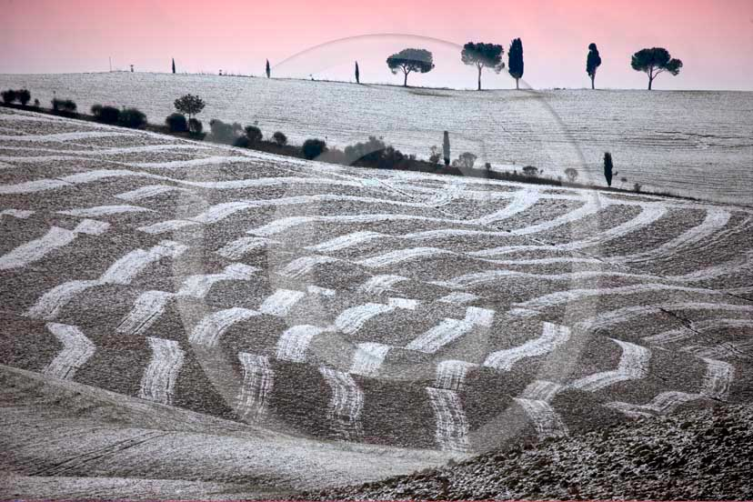 2009 - Landscapes of plowed field and cipress with snow in winter on