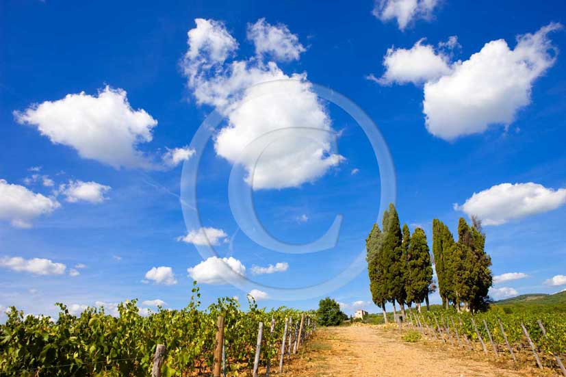 2009 - Landscapes of vineyards and cipress with white clouds in blue sky in summer, near Topina place, Chianti land, 13 miles north the province of Siena.